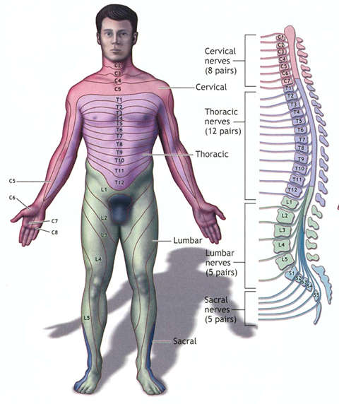 Asheville Chiropractor Disc Herniation In The Thoracic Spine