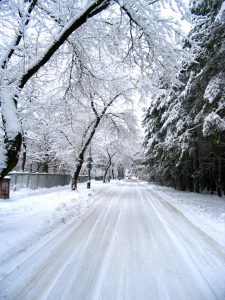 Snowy tree-lined road